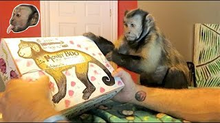 Monkey Birthday AWESOME FAN MAIL!