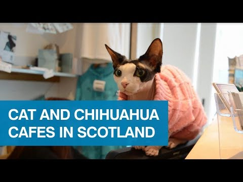 Cat and chihuahua cafes in Scotland