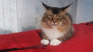 КОТЫ И КОШКИ Влог Яна на выставке котов Мэйн кун Донской сфинкс Британские коты