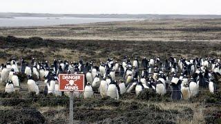 Холодная война - Война за Фолклендские острова