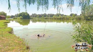 Карп утянул удочку в воду Как заставить карпа клевать в жару и получить кучу прикормки бесплатно