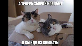 Веселые картинки. Прикольные котики самое смешное видео. Приколы про кошек.