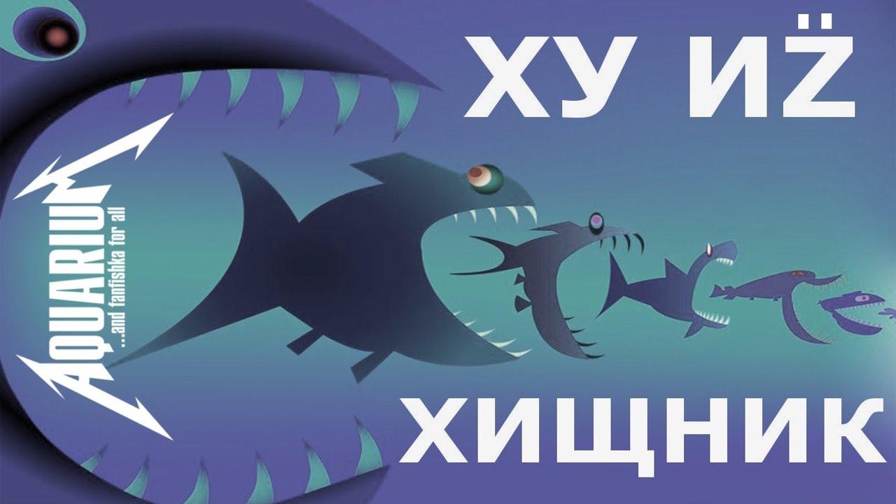 Хищные аквариумные рыбки. Рубим правду-матку!