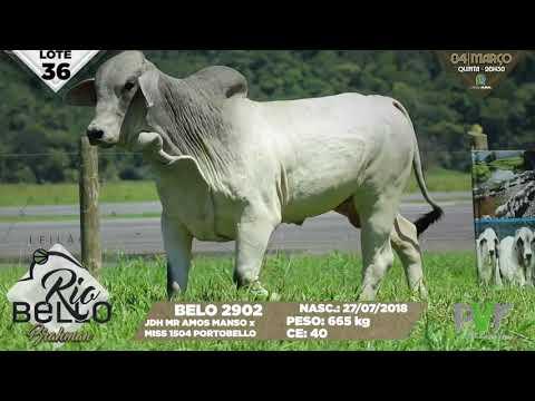 LOTE 36   BELO 2902