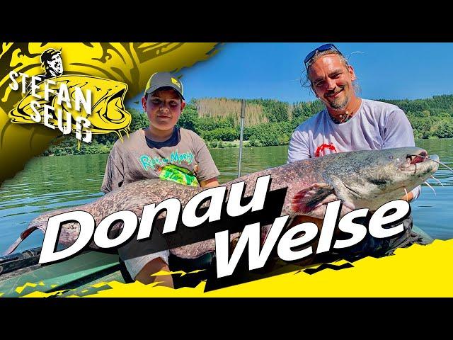 Angeln auf Wels mit Wallerholz und Boje | Donau Waller | Achtung!!!Treibkraut im Fluss!!!