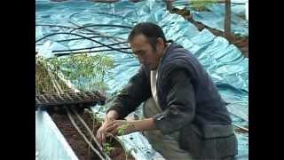 В Шымкенте создаются теплицы по новым технологиям(В Шымкенте появились теплицы работающие по новой технологии. Их особенность состоит в том, что овощи выращи..., 2013-02-15T15:57:31.000Z)