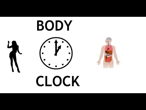 Body Clock - All Organs Have Their Own Time