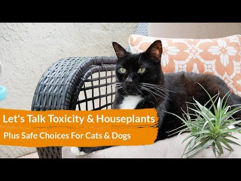 Let's Talk Toxicity & Houseplants; Plus Safe Choices For Cats & Dogs / Joy Us Garden