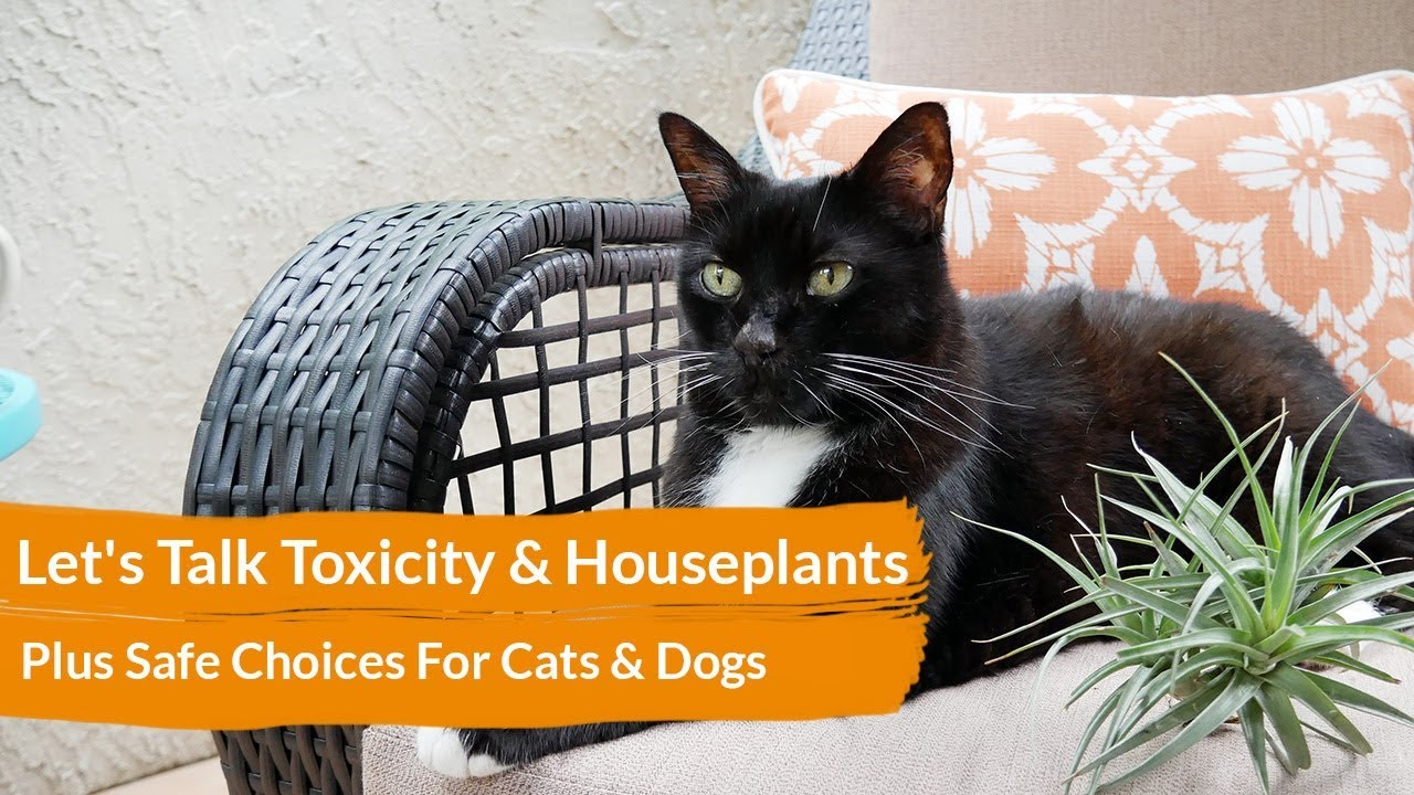 Lets Talk Toxicity Houseplants Plus Safe Choices For Cats Dogs