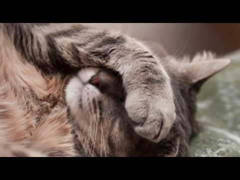 Care for Cats - Vomiting of Blood in Cats - Cat Tips