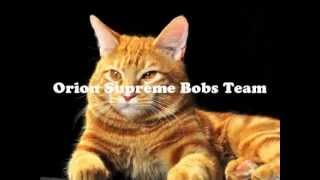 Курильский бобтейл.Orion Supreme Bobs Team.Орион г.Братск.