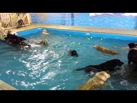 Spring 2014 Dog Swim Party!