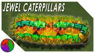 Jewel Caterpillars - Nudibranchs of the Trees
