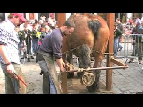 Shoeing a Draft Horse in Belgium