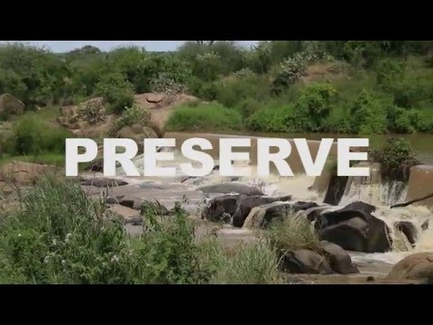 Citizen scientists: The endangered Grevy's Zebra needs your help