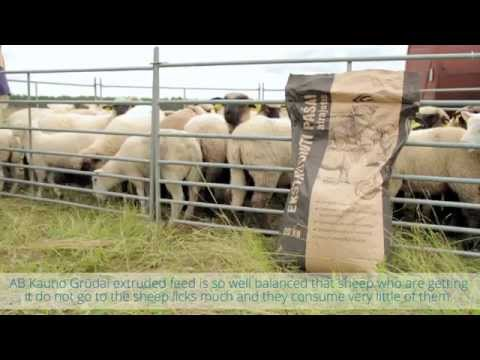 Farmers see the benefit of extruded feed as they switch to intensive cultivation of sheep