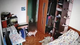 КОШКИ 2019 Смешные коты приколы одни дома