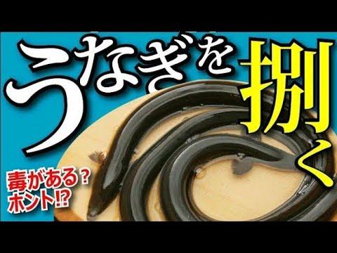 【うなぎのさばき方】初めてうなぎを捌く時に見て欲しい動画!