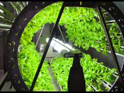 Ocean Grown Vegetables Don Jansen Sea Energy Agriculture