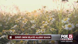 Pollen count high as allergy season underway
