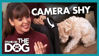 Adorable Dog Hates Having Her Picture Taken | It's Me or the Dog