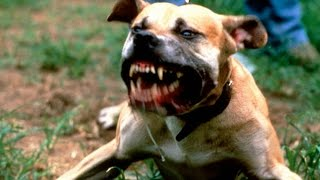 Самые опасные в мире собаки Рейтинг