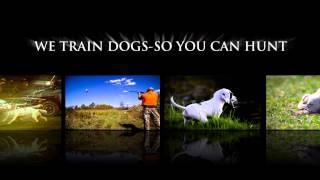 Bird Dog Training-new York Www.lightningflashsetters.com