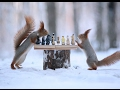 Top funny squirrel videos compilation 2017 best of cute animals mp3