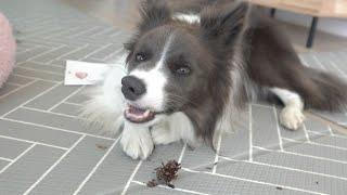 마당을 자유롭게 다니는 강아지들! 남모를 청소고충