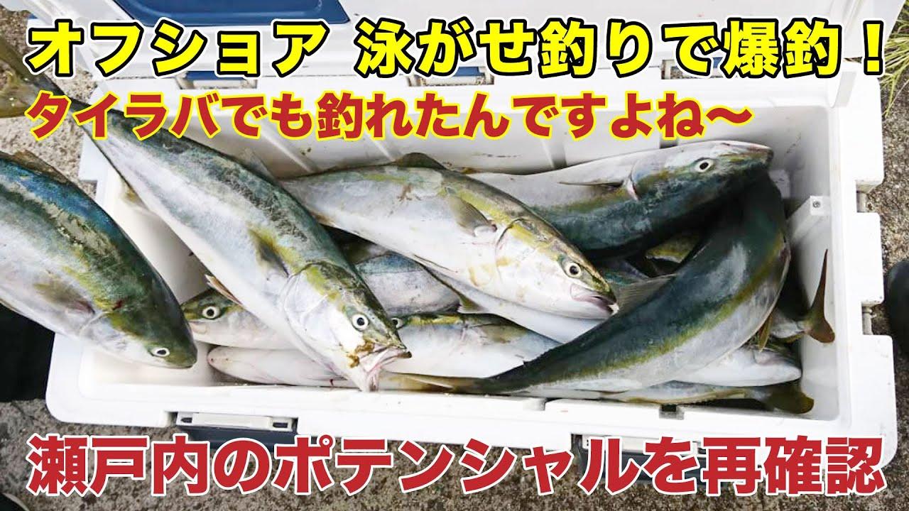 【オフショア】青物 泳がせ釣りで大爆釣!タイラバ 釣りもやってみたら釣れた。