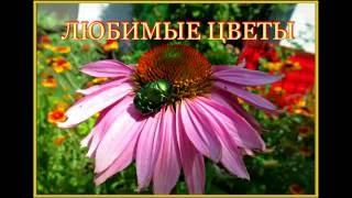 Мои садовые цветы. Сад летом.(Мои любимые садовые цветы. Сад летом. Цветы в моем саду. Как можно не любить цветы? Смотри видео из моего..., 2016-07-18T05:07:59.000Z)