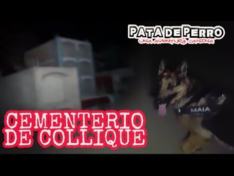 Cementerio de collique de noche-PATA DE PERRO una aventura canina