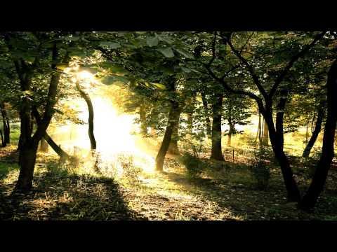 Ishq - Bloom [Full Album HD]