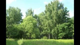Download таинственный лес Фридерик Шопен Mp3 and Videos