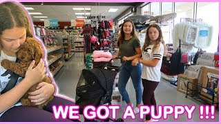 We got a Puppy !!! Bringing Home Our 12 Week Old Mini Poodle | SISTER FOREVER