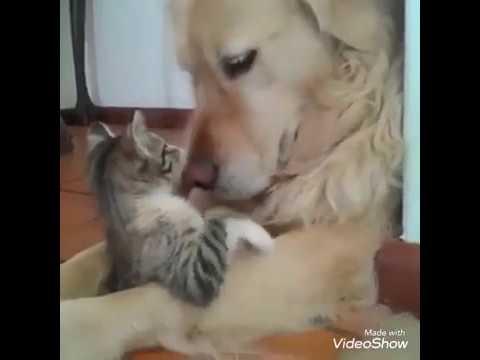 น้องแมว น้องหมา เฮฮา น่ารัก funny cat. Cute cat