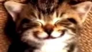 Kucing nyanyi happy birthday lucu banget