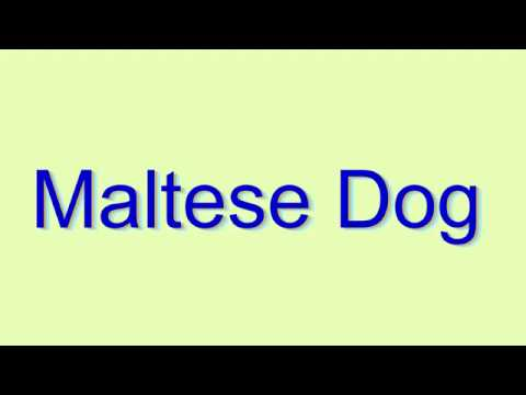 How to Pronounce Maltese Dog