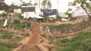 Especies vegetales para prevenir derrumbes y erosión - Universidad Nacional de Colombia