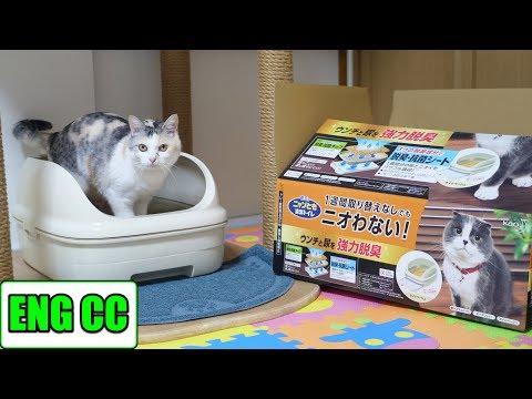 ニャンとも清潔トイレを初体験した三毛猫姉さんEng CC
