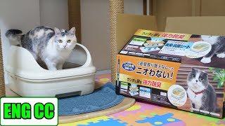 ニャンとも清潔トイレを初体験した三毛猫姉さん【Eng CC】