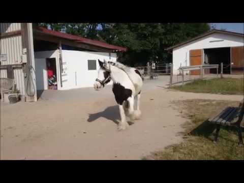 Koppelauftrieb Privatpferde (Stuten) 2015    Reitstall Lindenhof