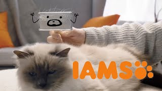 IAMS Brush
