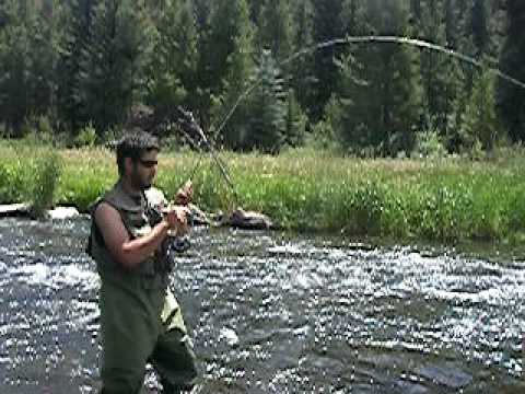 7.5 Pound Brown Trout, Yampa River. Fly Fishing Colorado. UNBELIEVABLE FOOTAGE!!