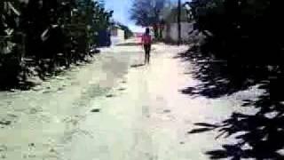 el mastranto del refugio (san felipe guanajuato)
