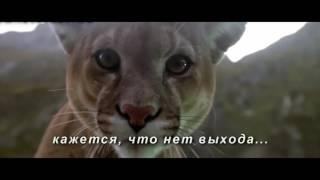 Отрывок из фильма ,Медведь'' (1988)