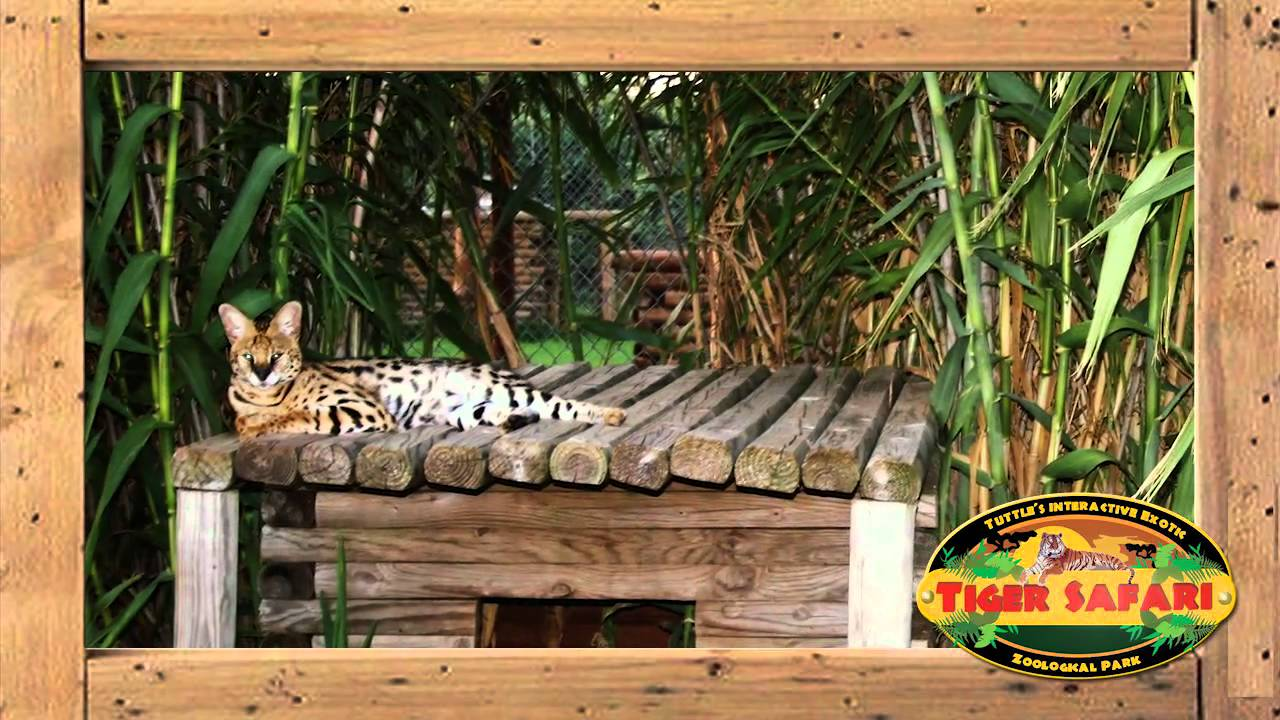 Tiger Safari : Oklahoma's Interactive Zoological Theme Park!