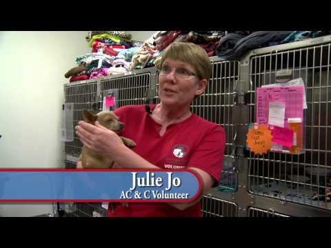 Maricopa County Animal Care & Control Volunteers