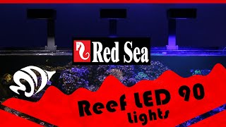 ReefLED 90: Red Sea's first dive into LED Reef Lighting