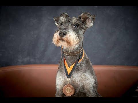 Eric - Miniature Schnauzer - 2 Weeks Residential Dog Training